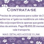 CONTRATA-SE PESSOA PARA CUIDAR DE 2 CACHORROS E 1 GATO!!